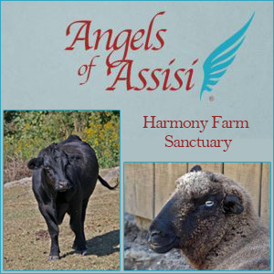 WFXR and VirginiaFirst.com are helping out Harmony Farm Sanctuary