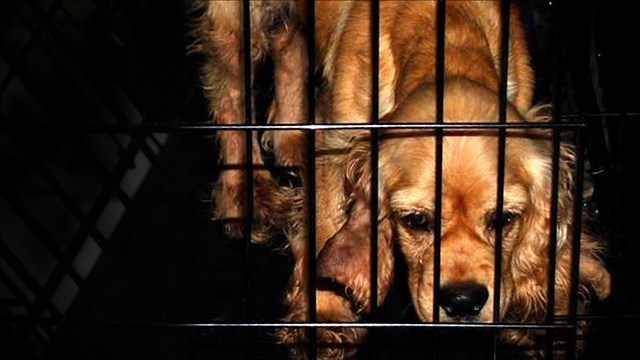 New laws target puppy mills and allow lifetime pet licenses