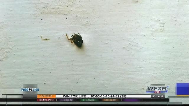 Virginia woman finds bed bugs in new apartment spiritdancerdesigns Gallery