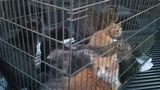 Dozens of cats rescued by Galax Fire Department