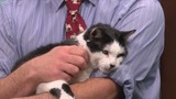 Furry Friends: Meet sweet Kinkaid